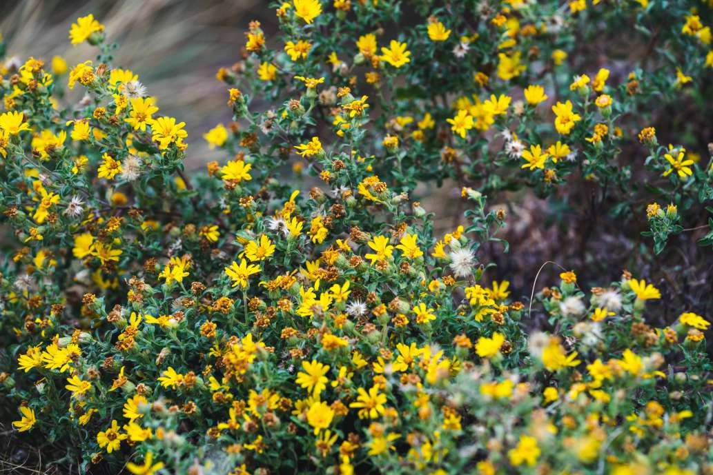 a bush full of beautiful yellow flowers in the spring time